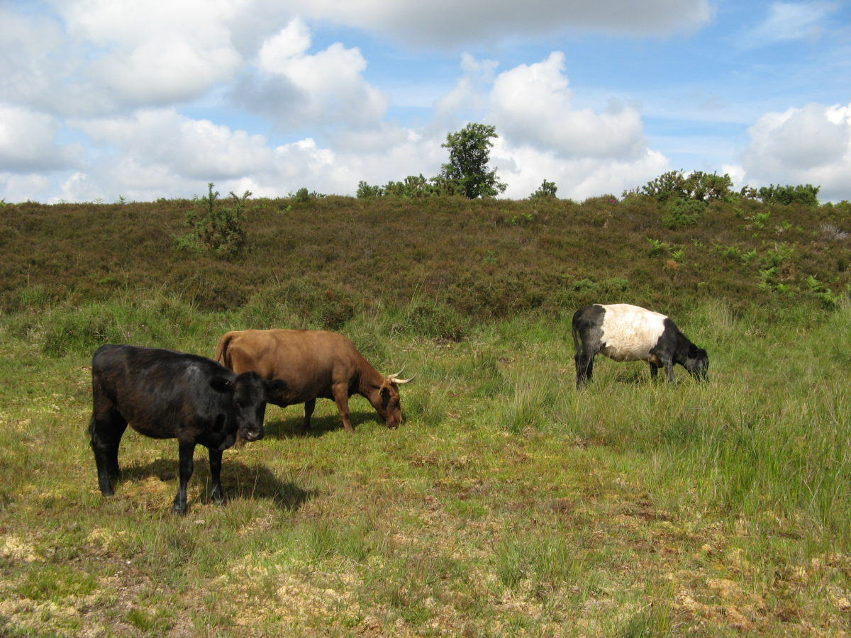 New paper: Do dung fungal spores make a good proxy for past distribution of large herbivores?