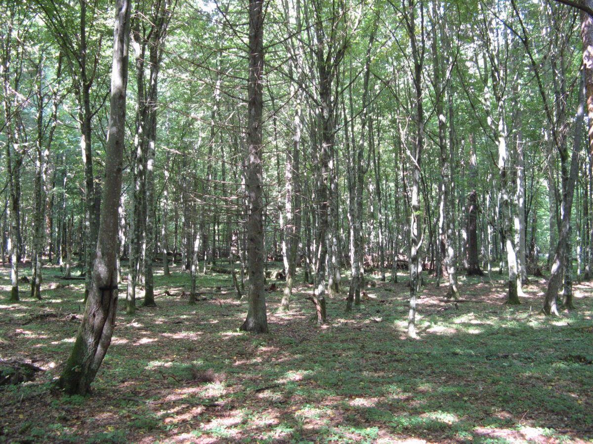New paper: Pollen productivity from the old-growth forest of Białowieża differs from that of cultural landscapes across Europe
