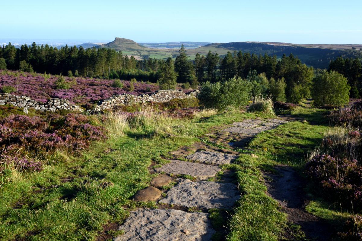 A spot of nature: Teesside's outdoor hotspots
